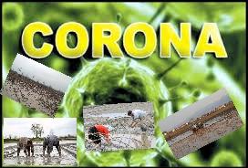 کرونا +کشاورزی