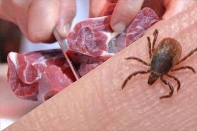 تب کنگو  عنکبوت