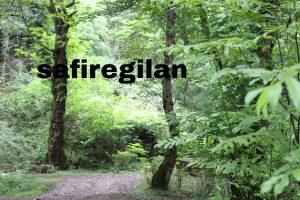 جنگل+لاسک