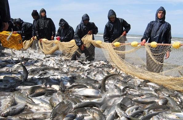 فصل صید ماهیان استخوانی دریای خزر در گیلان تمدید شد