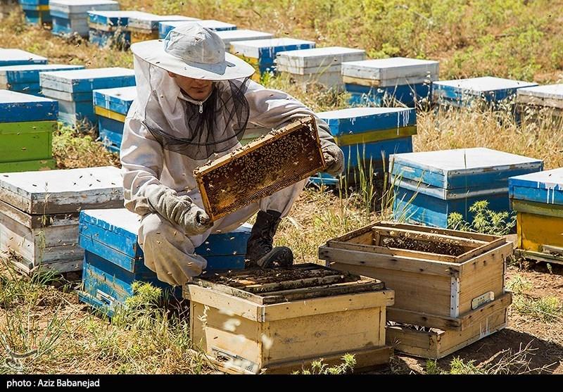شیرین شدن کام جوانان تحصیل کرده روستایی صومعه سرایی با تولید فراورده های عسل