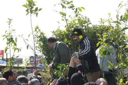 توزیع ۱۱۰ هزار اصله نهال رایگان در گیلان