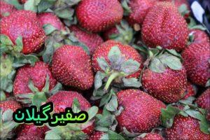 هشتمین جشنواره توتفرنگی در صوفیانده صومعهسرا برگزار می شود