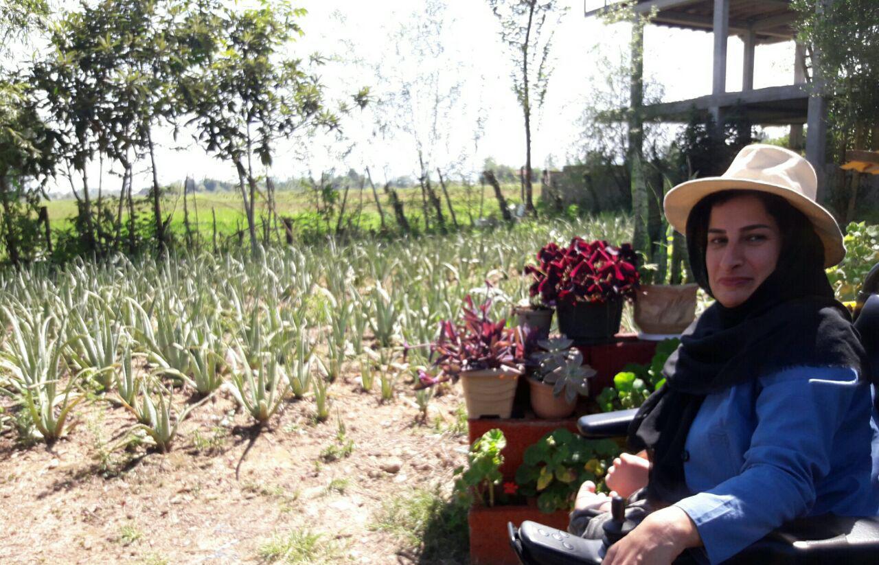 پرورش آلوئه ورا توسط دختر کم توان فومنی گامی در جهت تحقق اقتصاد مقاومتی/دستان کم توان ولی با مهارت غیر قابل وصف شدن/در کنار گلدانهای آلوئه ورا آرامش گرفتم/امروز بیش از  ۲۰۰ گلدان گیاه پر خاصیت آلوئه ورا برای عرضه به بازار دارم