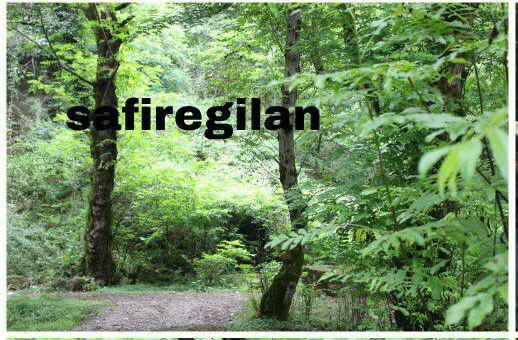 طرح های ساماندهی جنگلنشینان کمکی به احیاء جنگلها نکرد